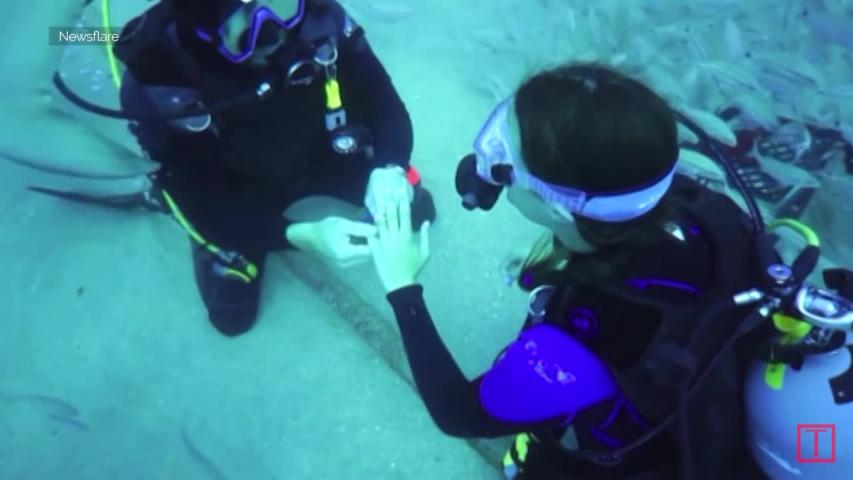 Couple Gets Engaged Underwater With Some Sharks