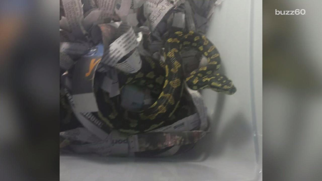 Commuters Freaked Out By Snake on a Train