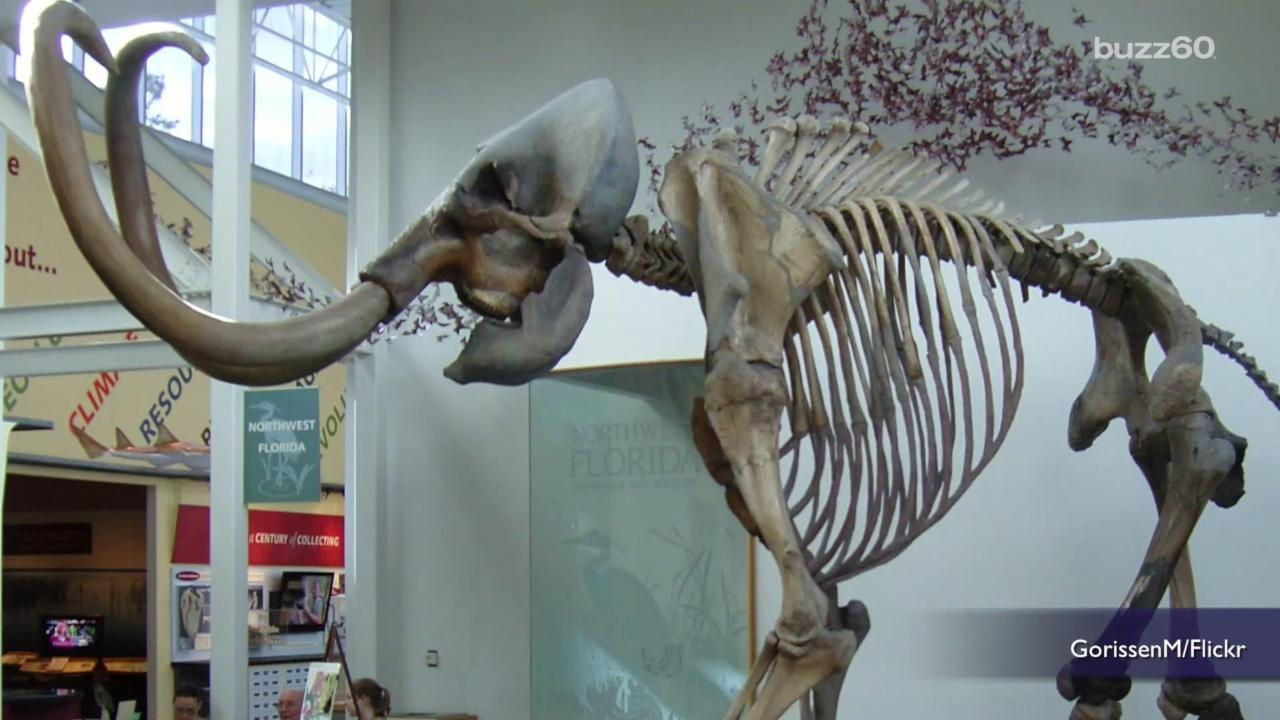 How Reviving Woolly Mammoths Could Protect the Planet