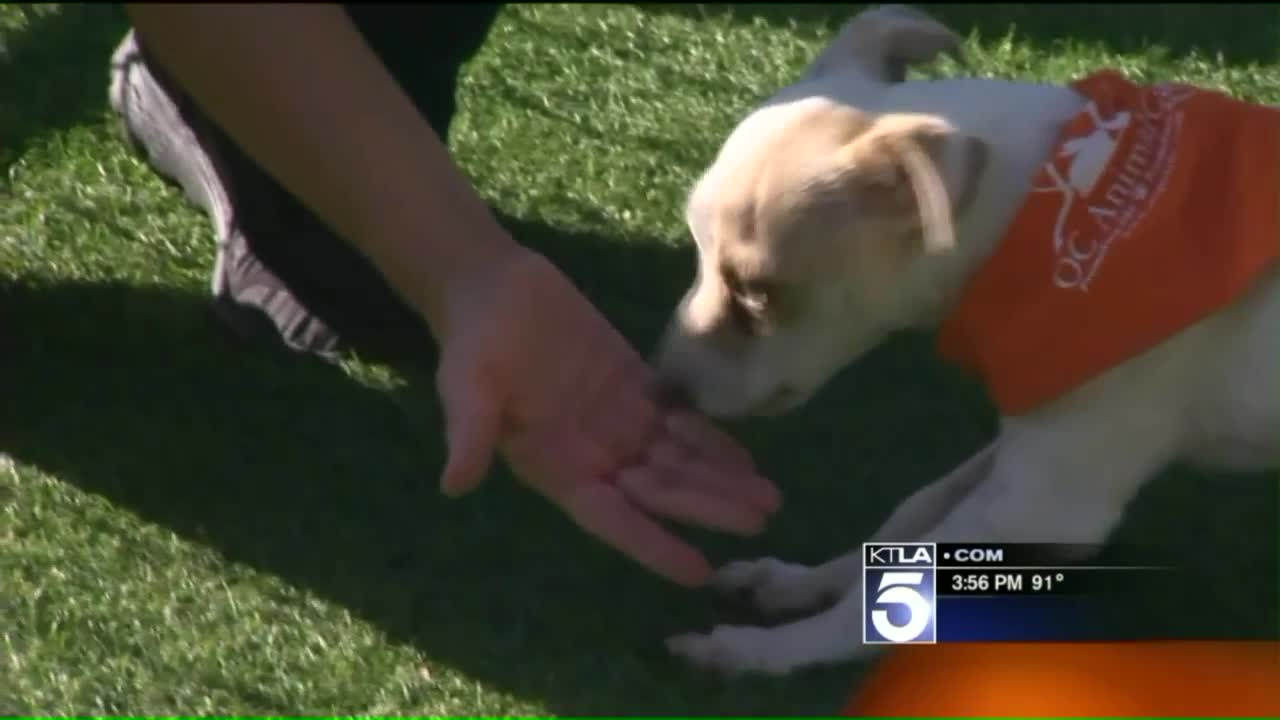 Puppy Who Tested Positive for Meth Looking for Forever Home