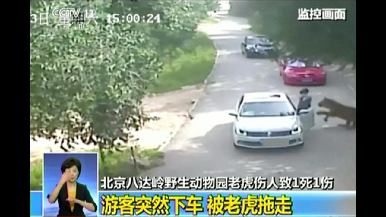 Watch: Woman killed by tiger at Beijing safari park