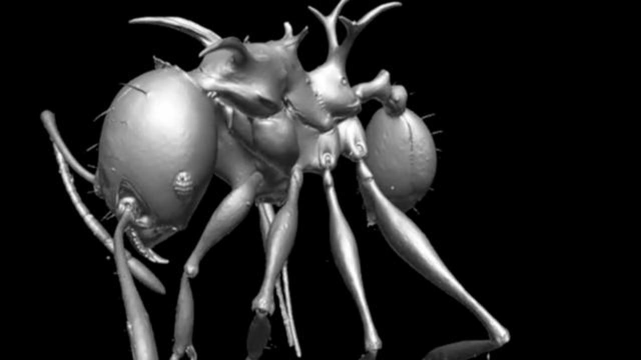 Scientists Announce Discovery Of New 'Game Of Thrones' Dragon Ant Species