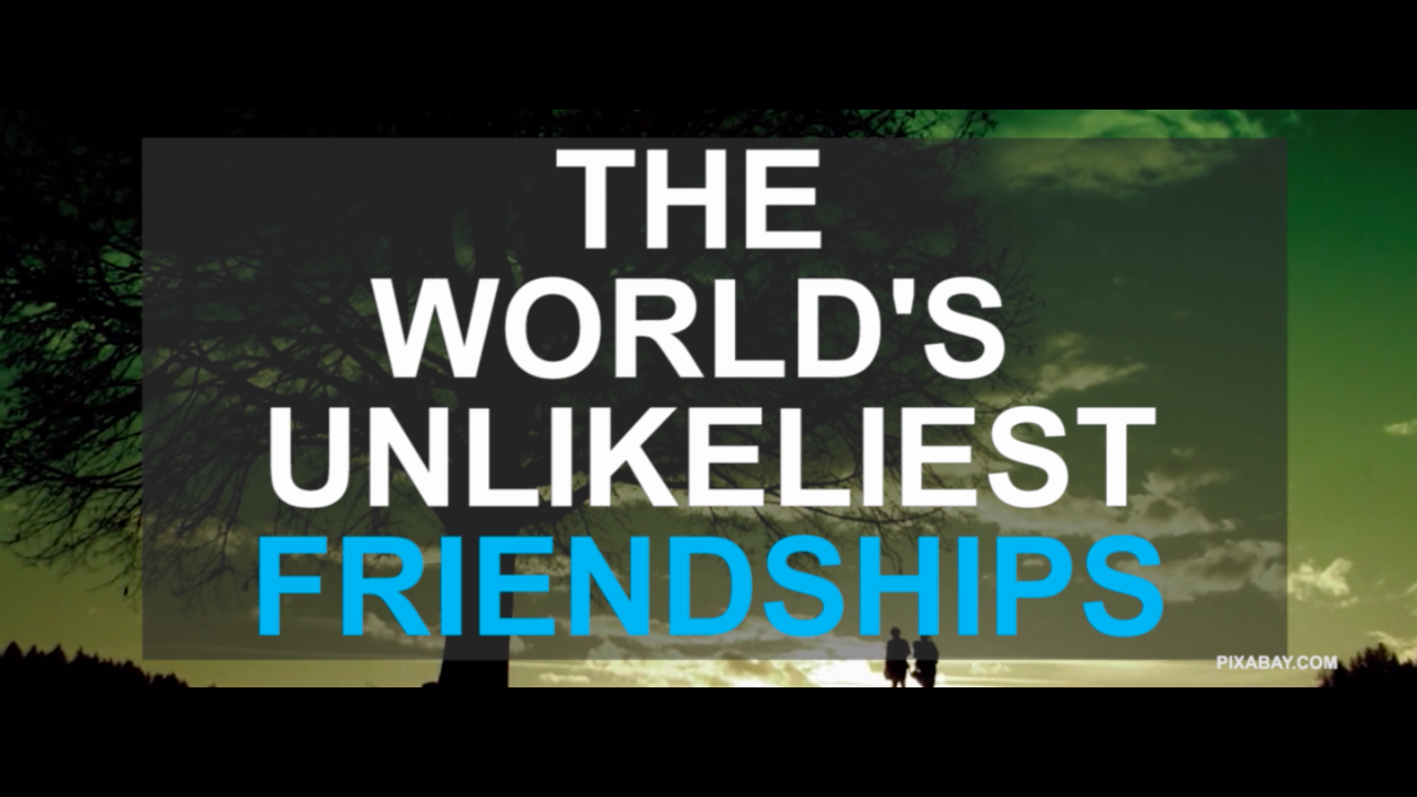 The world's unlikeliest friendships