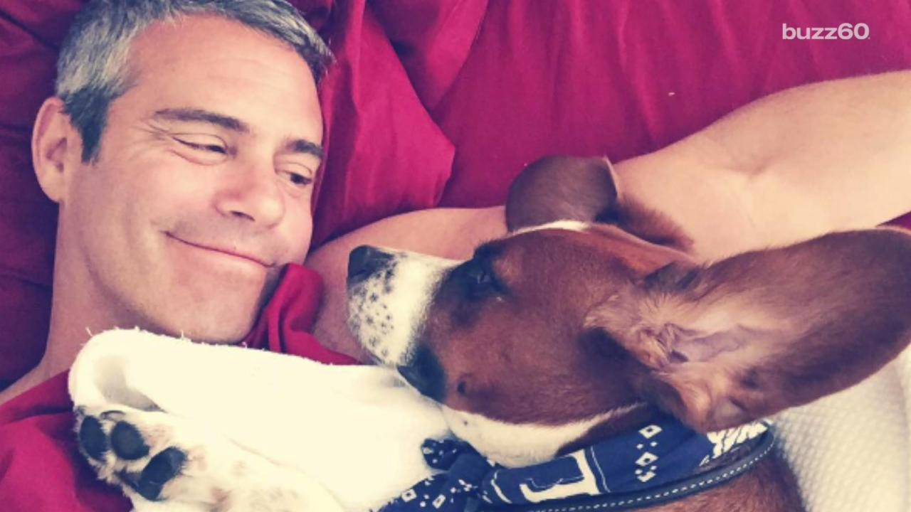 Andy Cohen Teams Up With Mutt-I-Gree to Bring Rescue Pups to Schools