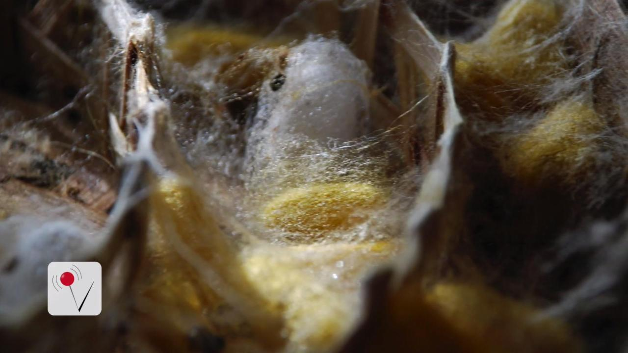 U.S. Army Using Spiders to Save Soldiers' Lives