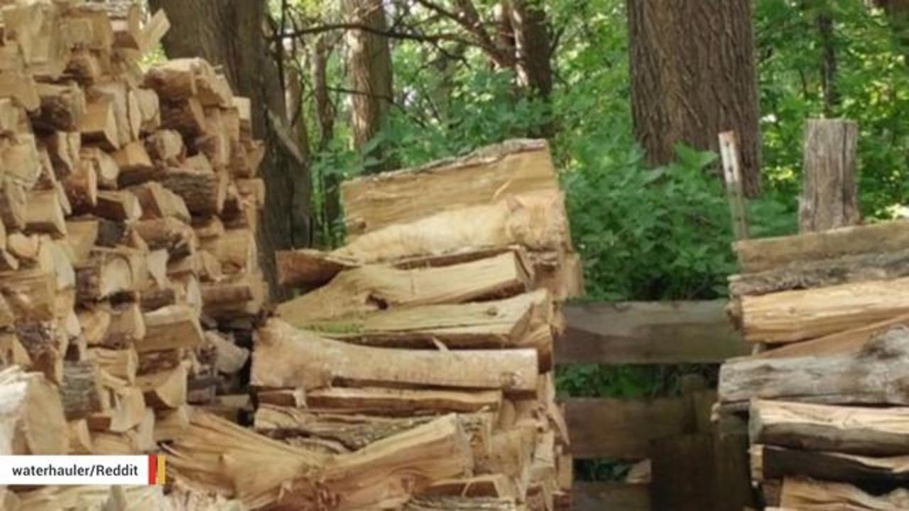 Cat Hiding In Plain Sight Stumps The Internet