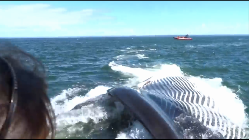 Tourists Gasp As Giant Finback Whale Slips Under Their Boat