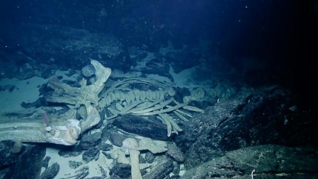 Deep-Sea Crew Spots Massive Whale Carcass And 'Mysterious White Orb'