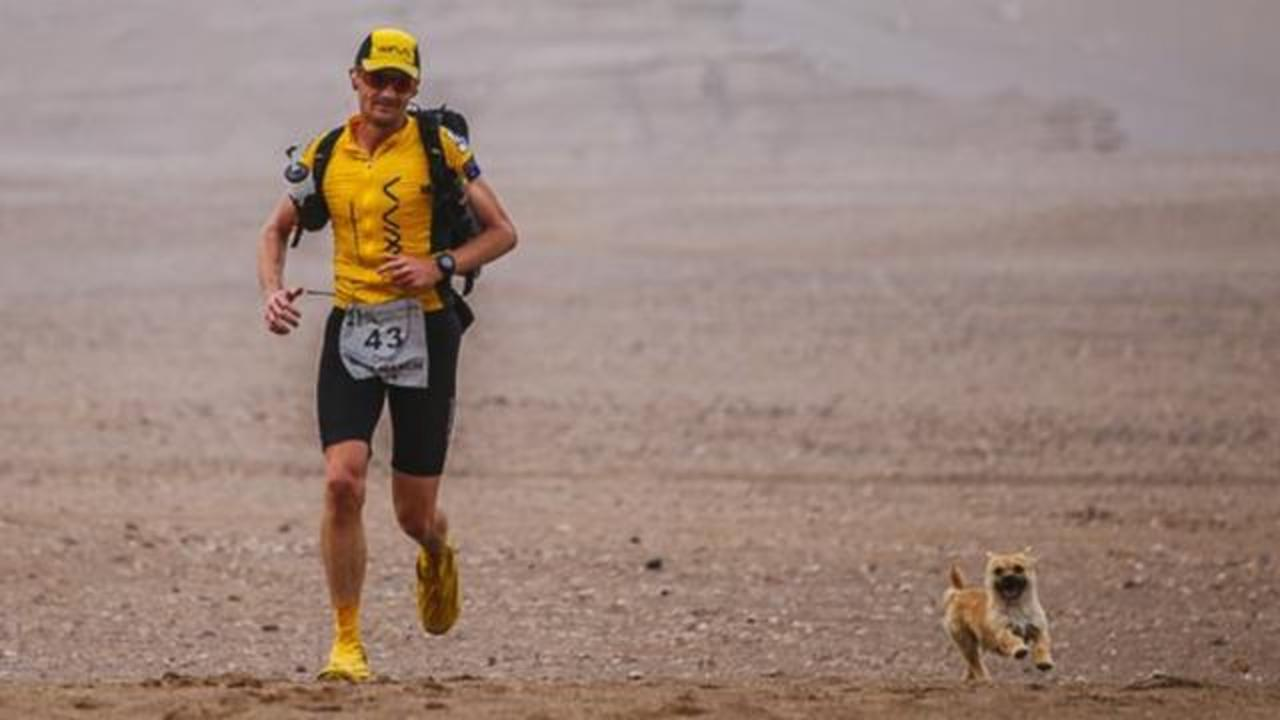 This Stray Dog Is Melting Hearts After Accompanying Marathon Runner In Grueling Gobi Desert Race