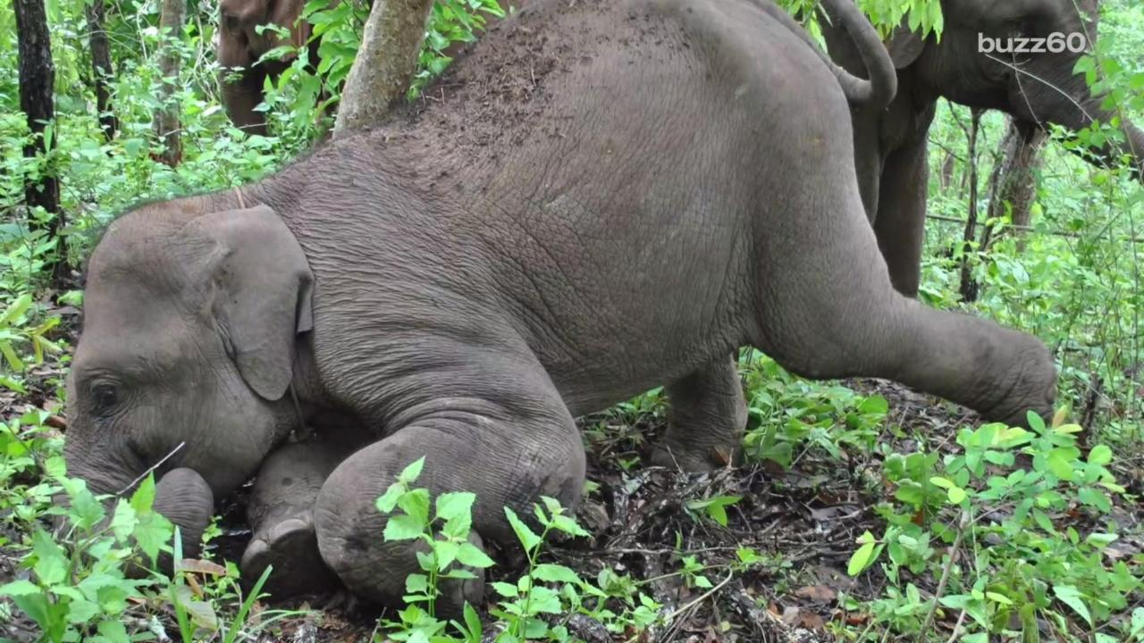 Orphaned Elephant Finds a New Home and a Best Friend
