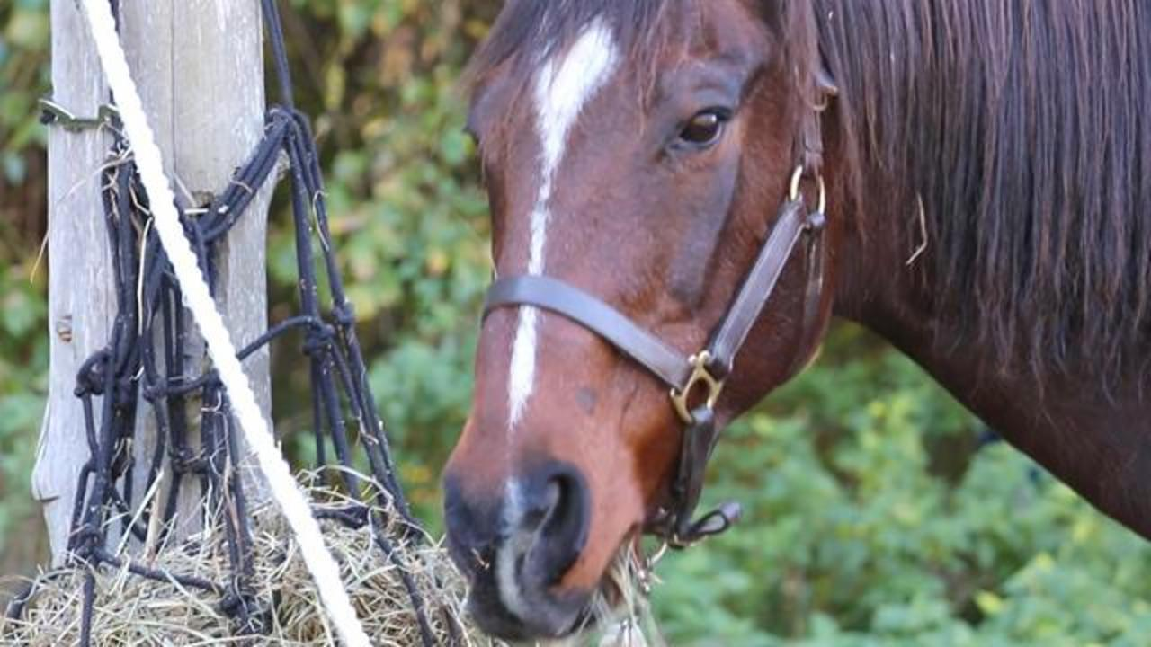 CDC: Woman Dies After Contact with Sick Horse
