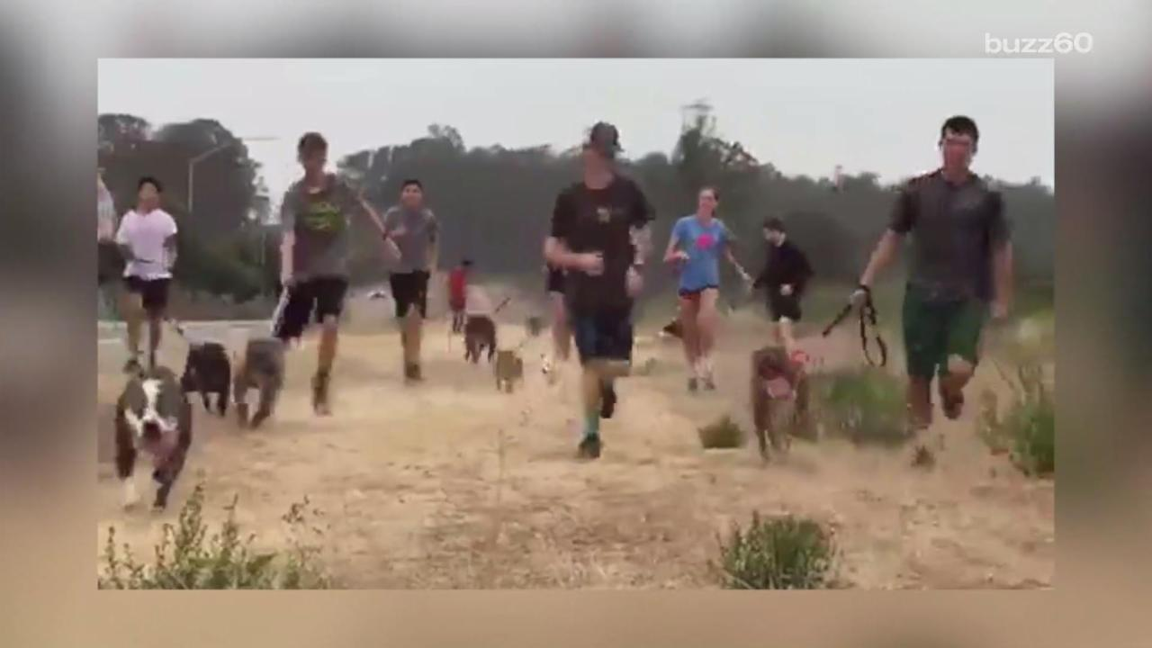 High School Track Team Runs With Shelter Dogs