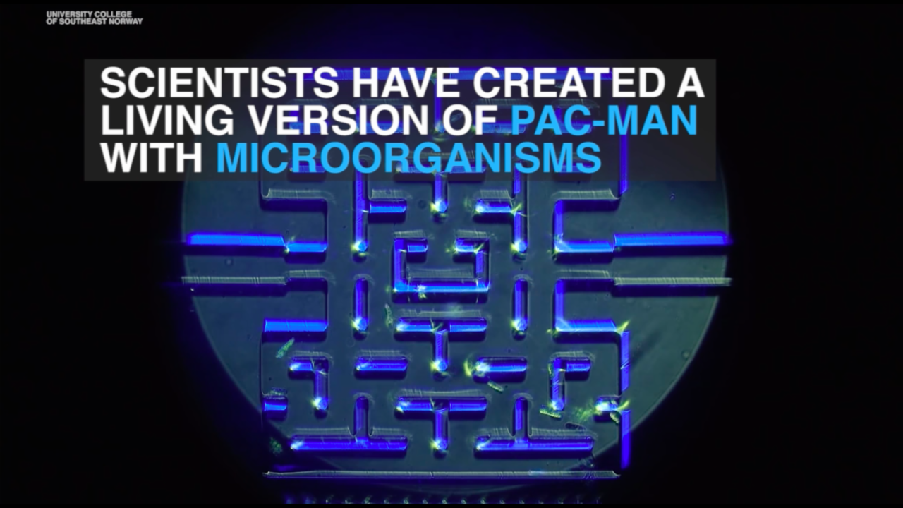 Scientists create living Pac-Man maze with microorganisms