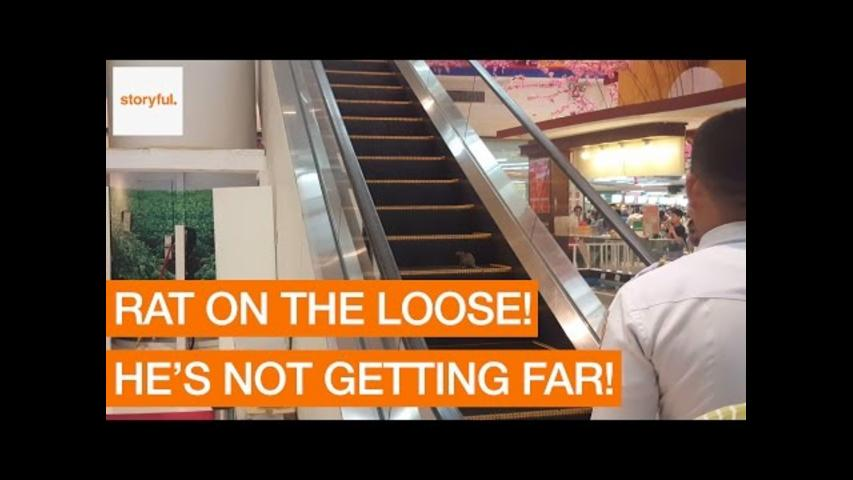 Runaway Rat Races Up Escalator at Shopping Mall