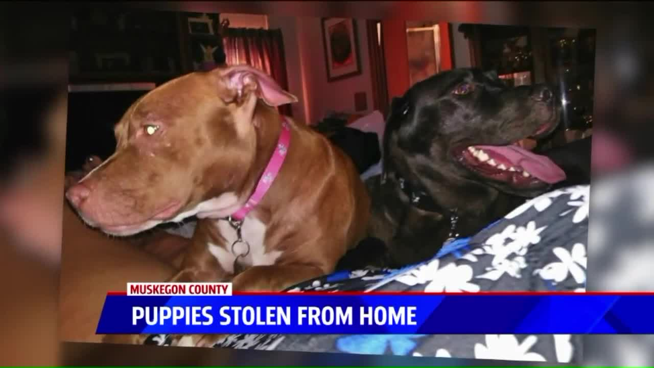 Woman Worried Stolen Puppies Were Taken as 'Bait Dogs'