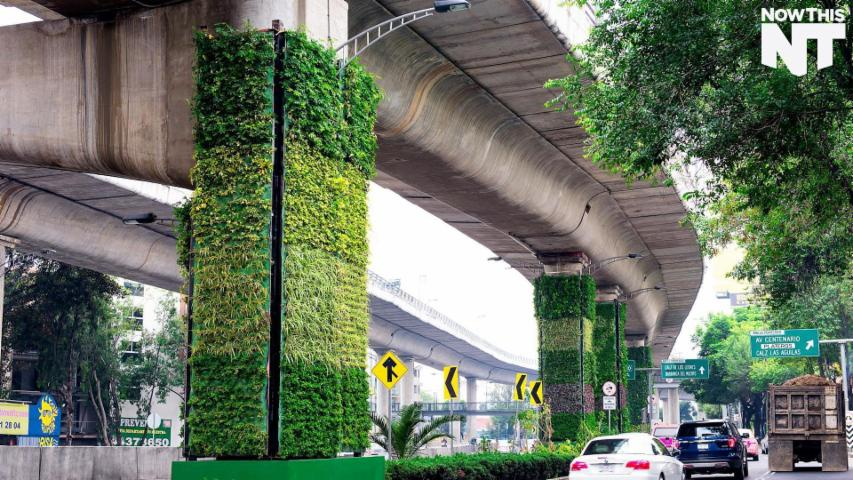 Mexico City's Vertical Gardens