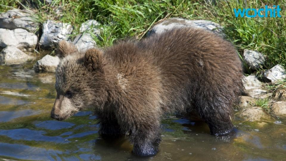 Wife of Man Who Speared Bear Loses Sponsorship