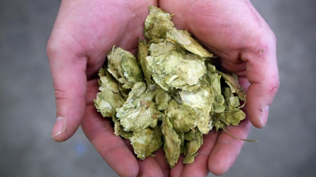 Brewing Company Owner's Dog Almost Dies After Eating Hops