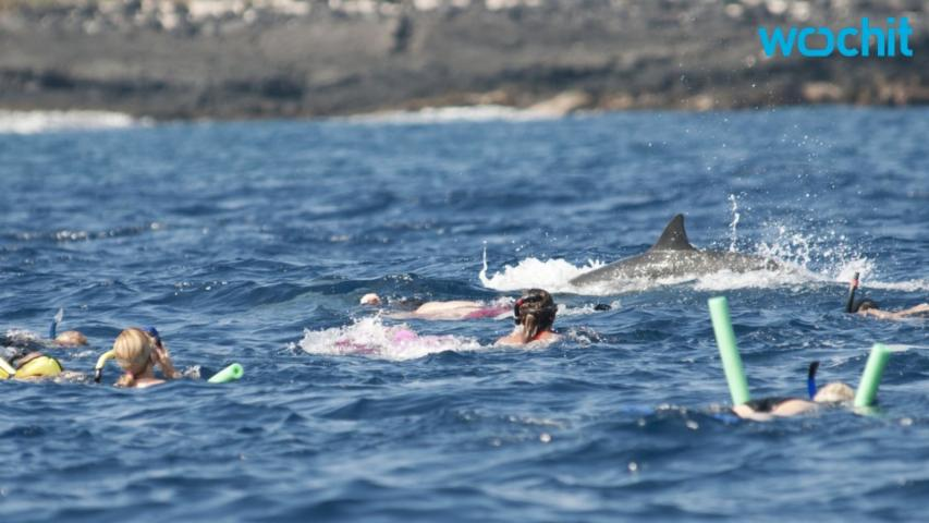 Swimming With Dolphins In Hawaii May Be Coming To An End