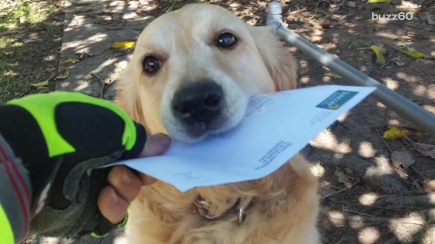 This Dog Absolutely Loves Mail