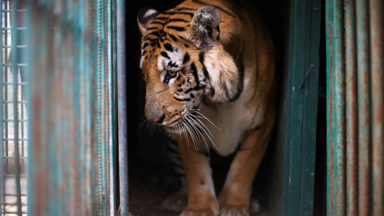 Notorious zoo in Gaza is closing and surviving animals are leaving