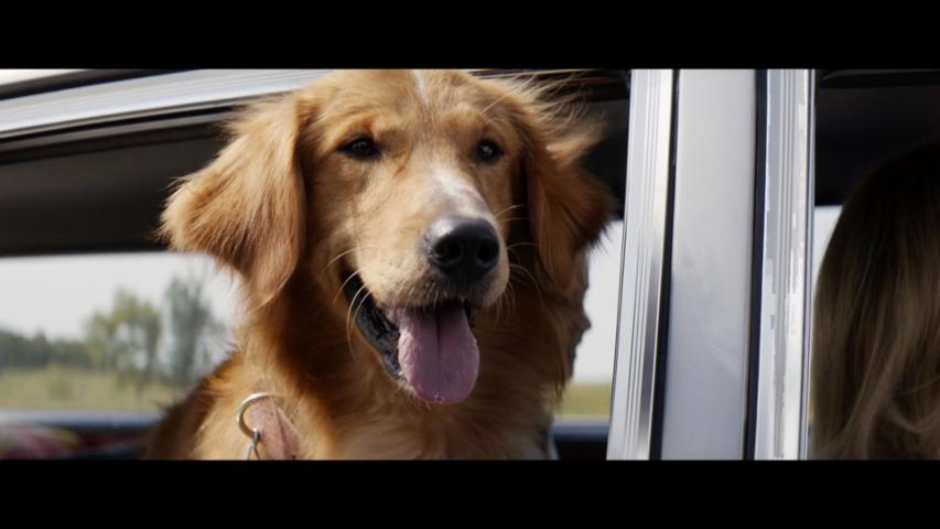 'A Dog's Purpose' (2017) Trailer