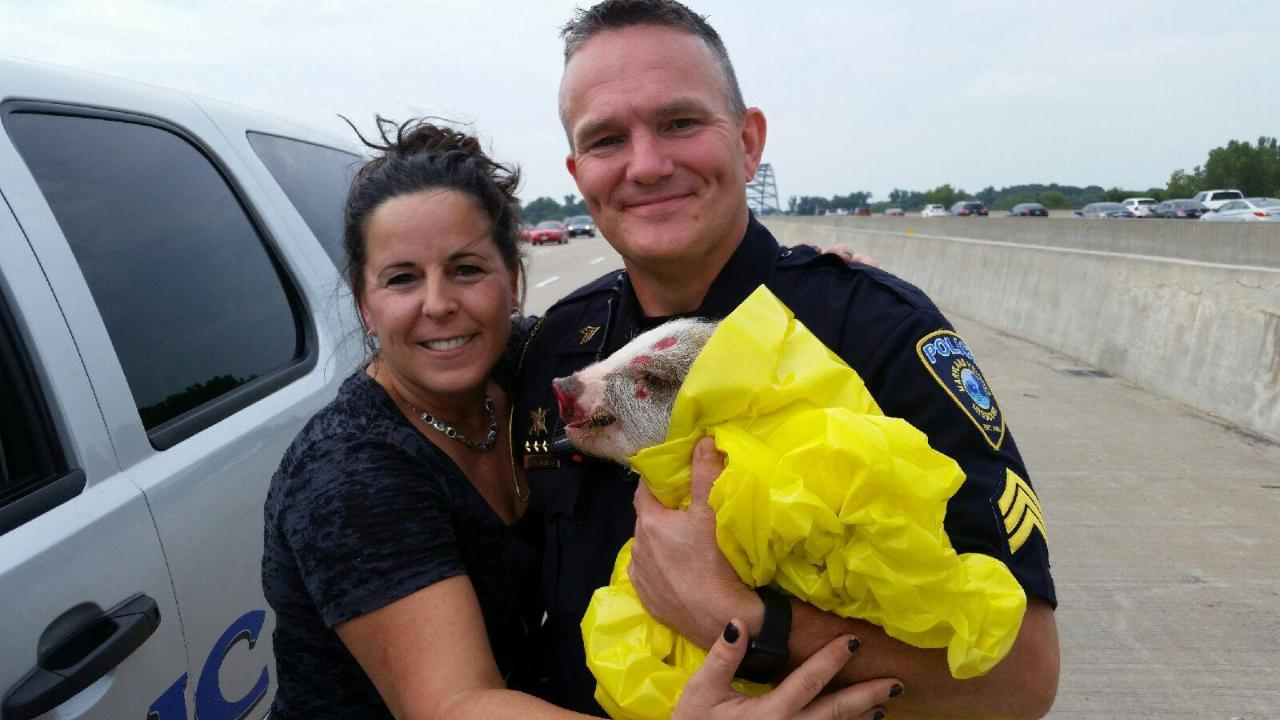 Police Officer Catches Pig in a Blanket on Missouri Highway
