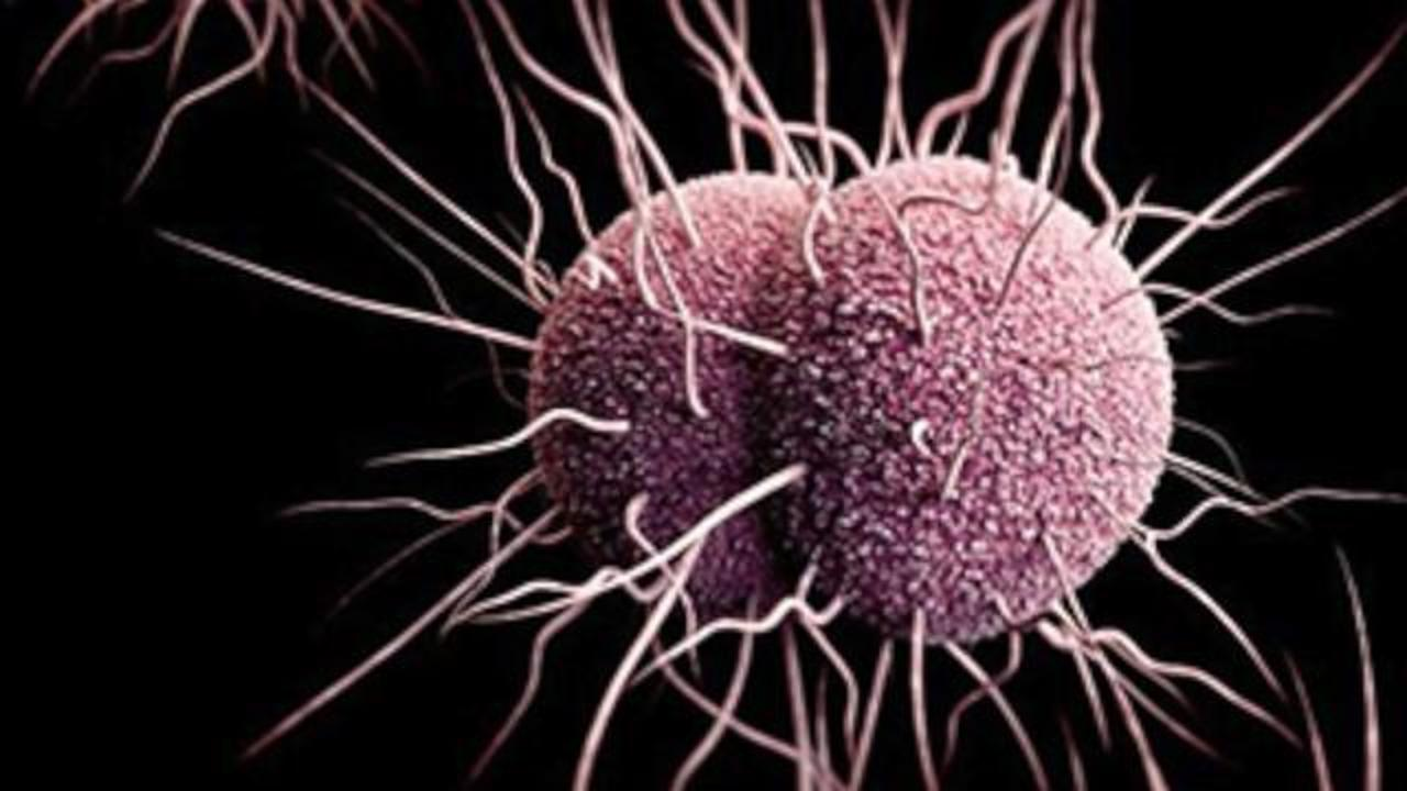 World Health Organization Warns Current Treatments for Gonorrhea May Soon Be Ineffective