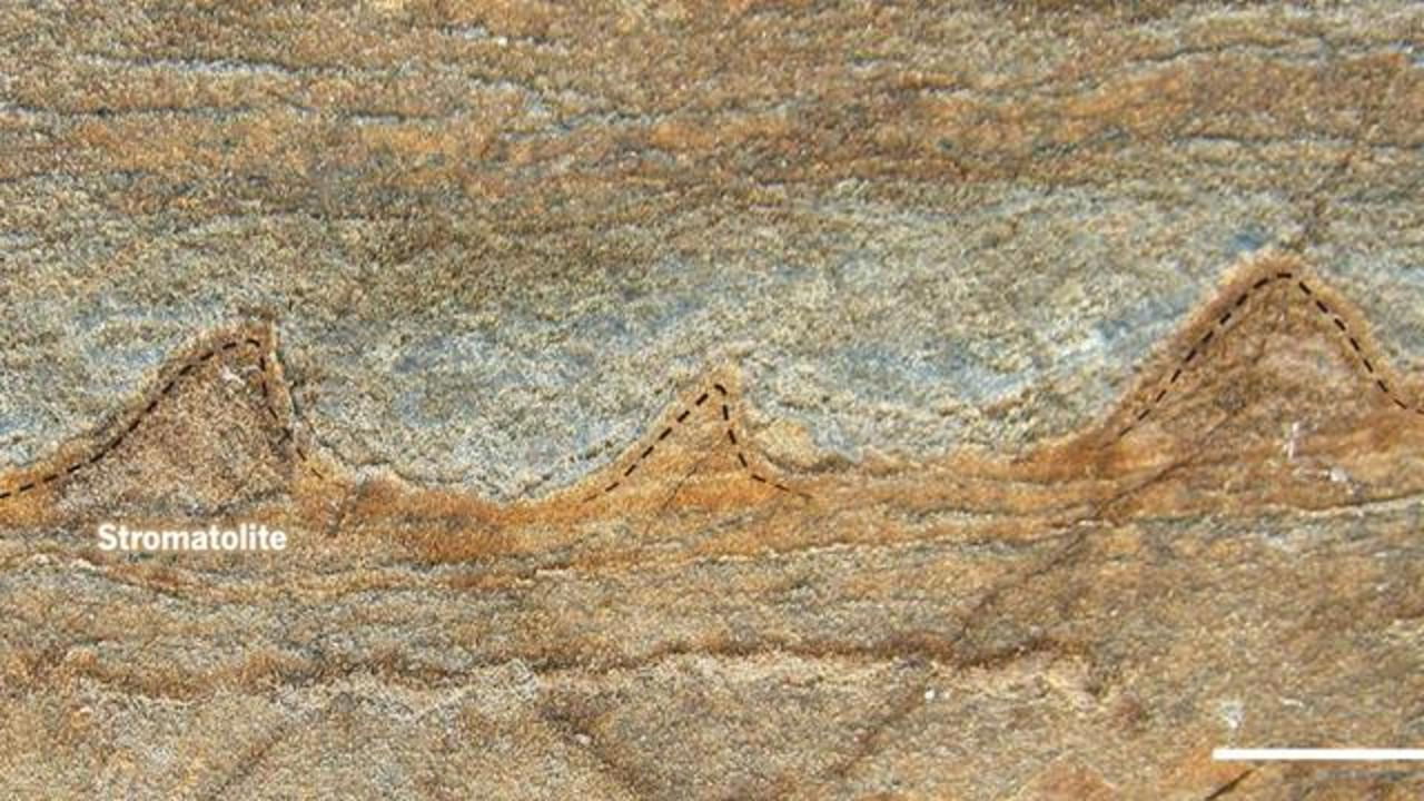 3.7 Billion-Year-Old Fossils Could Be World's Oldest