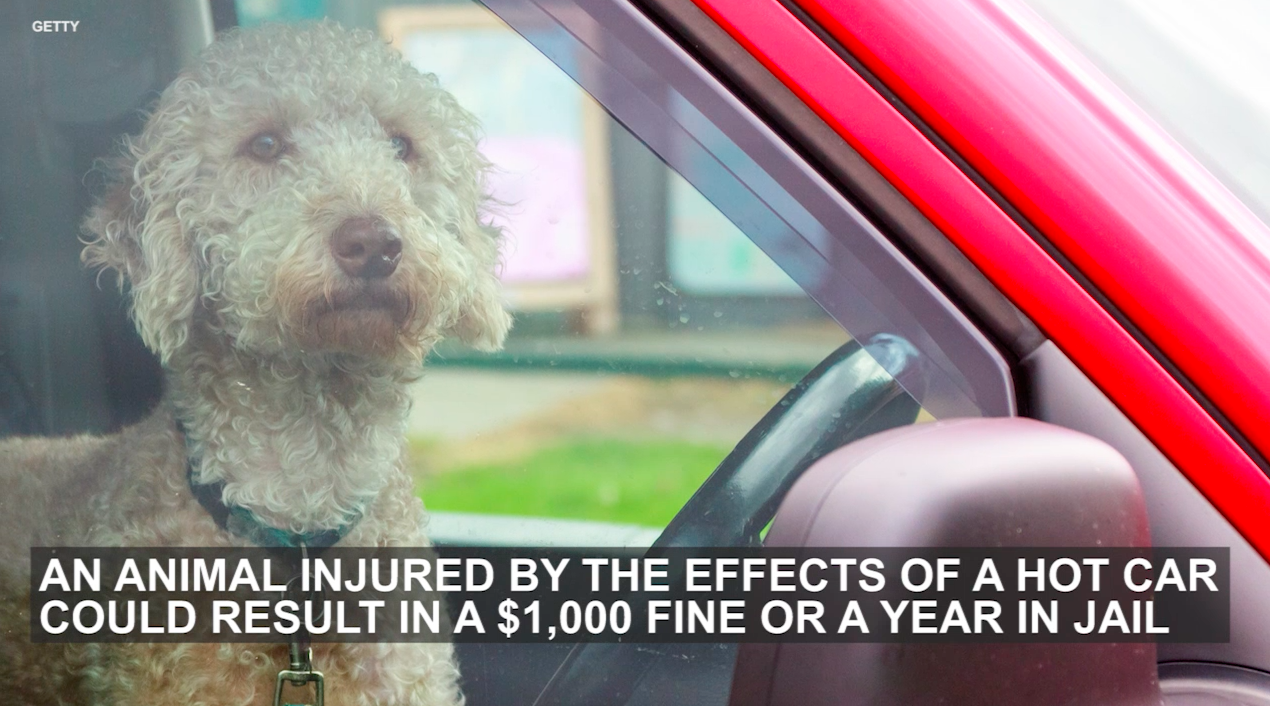 You could get jail time for leaving your pet in a hot car