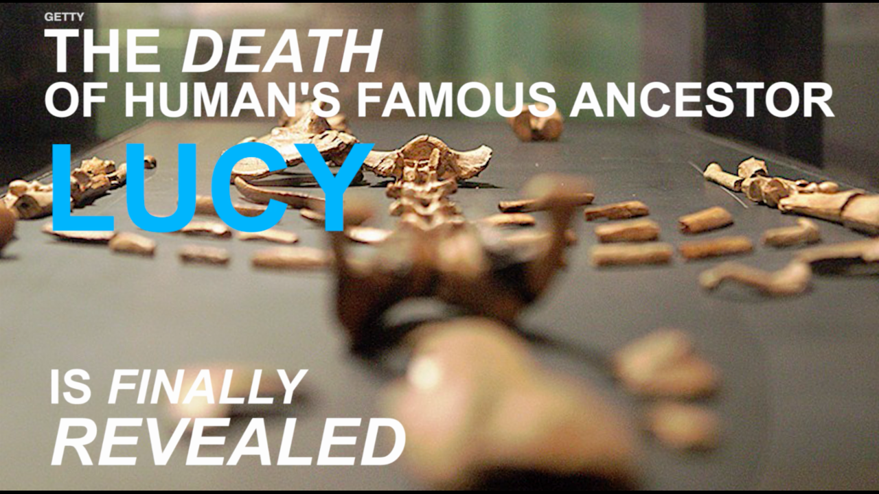 Ancestor Lucy died from falling from tree