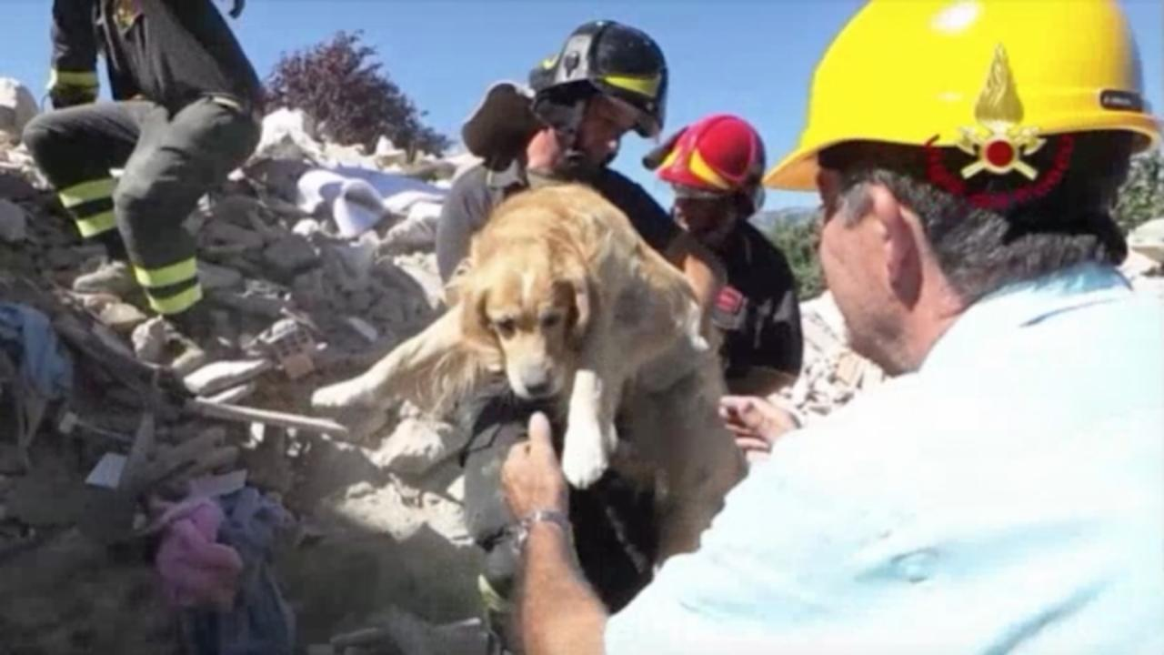 Dog Rescued 9 Days After Deadly Earthquakes in Italy