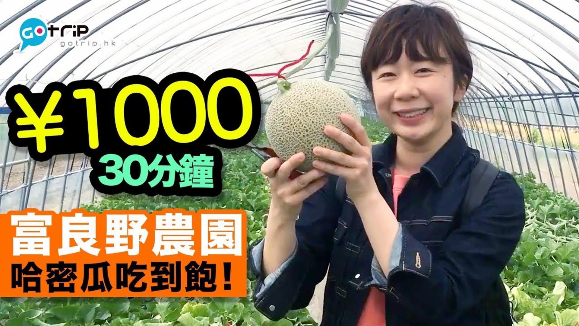 日本 北海道富良野農園哈密瓜收割體驗+1000日圓即場任吃【學做日本人】Ep.16