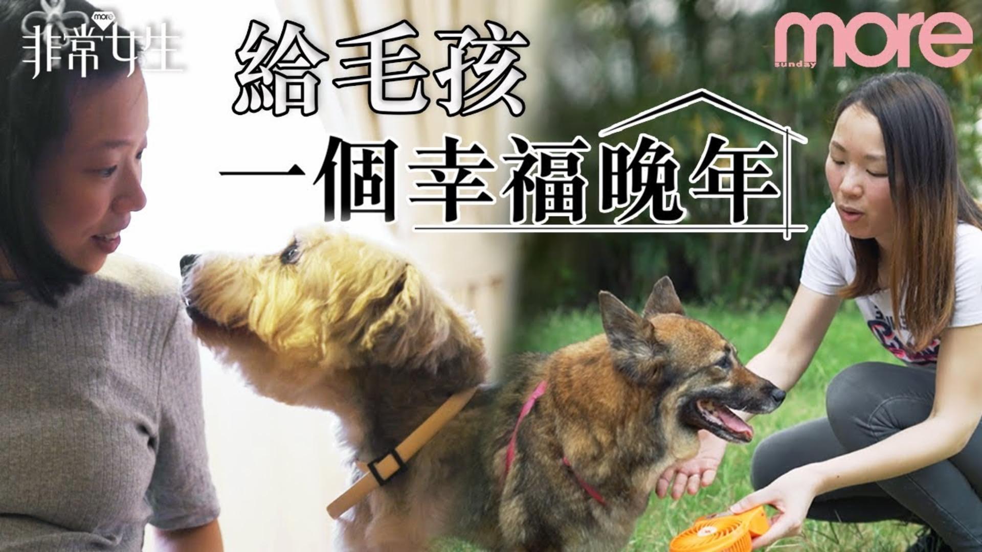 感人 給毛孩一個幸福晚年 與年老殘疾狗狗的故事【非常女生】Ep.24