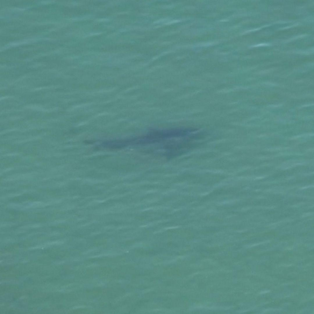 Cape Cod Sees Its First Shark Attack In Six Years