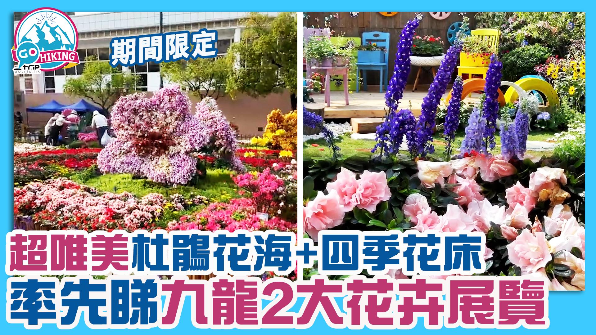 花卉展2021 荔枝角公園+九龍公園期間限定 杜鵑花海/四季花床
